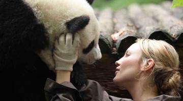 Sneezing-Baby-Panda
