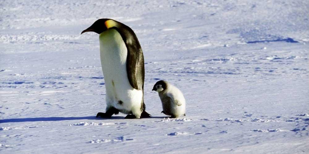 marcia-pinguini